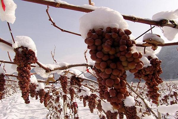 Rượu vang Ice Wine
