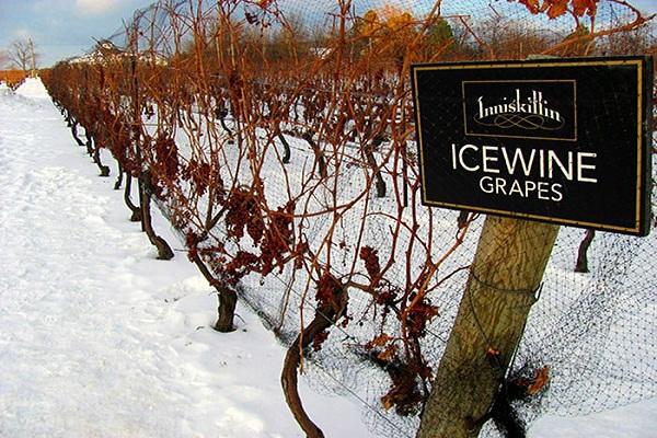 Rượu vang đá Ice Wine
